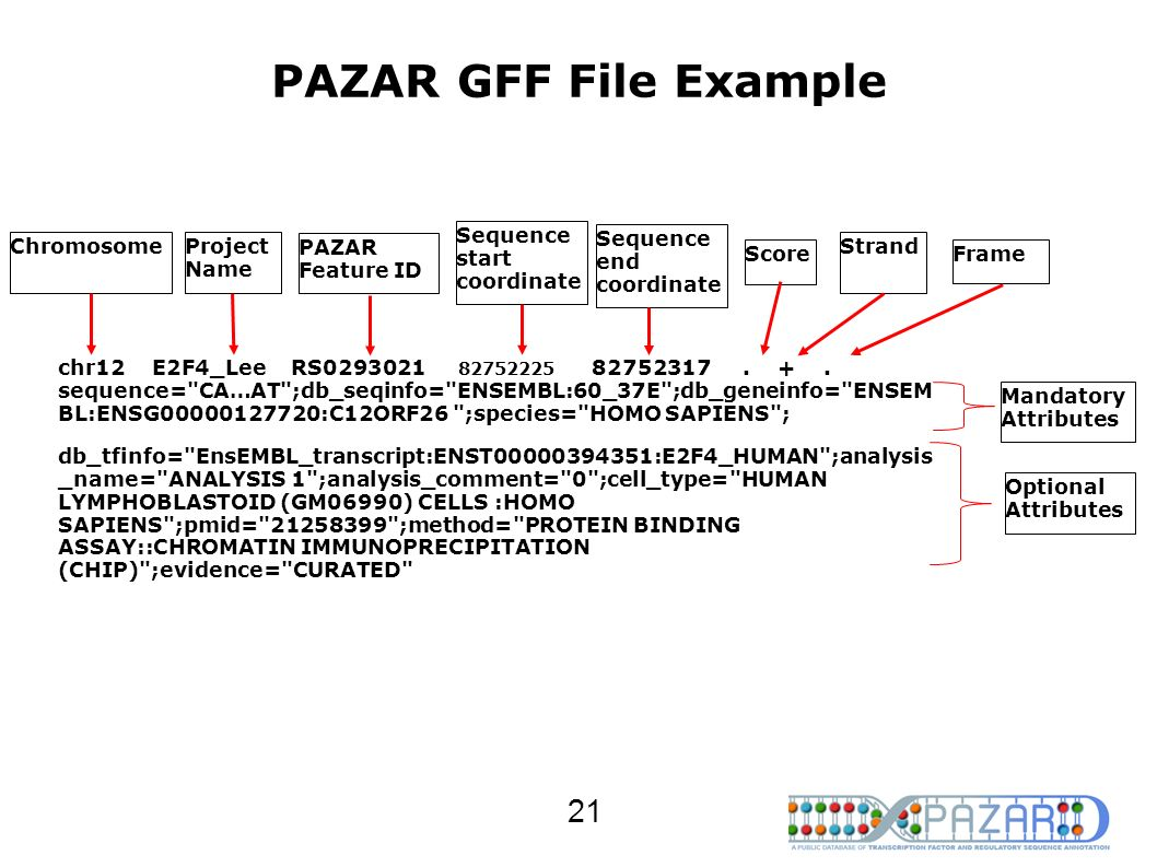 PAZAR GFF File Example chr12 E2F4_Lee RS0293021 82752225 82752317. +. sequence=