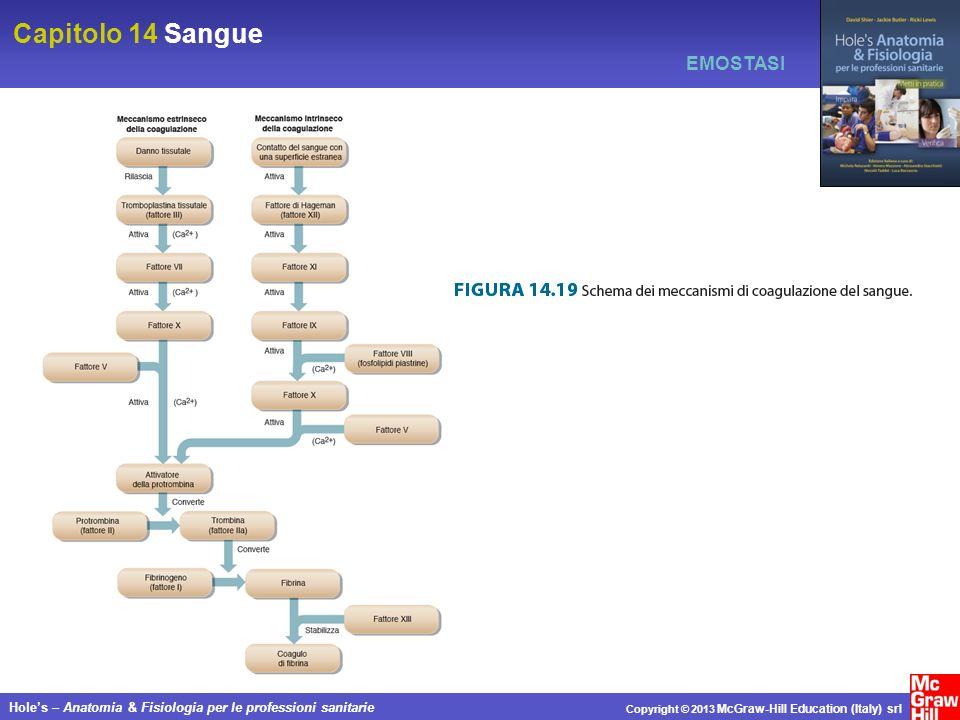 Capitolo 14 Sangue Holes – Anatomia & Fisiologia per le professioni sanitarie Copyright © 2013 McGraw-Hill Education (Italy) srl EMOSTASI