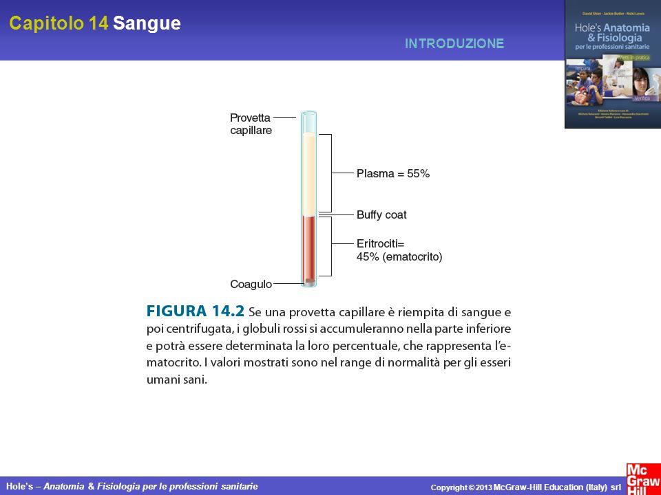 Capitolo 14 Sangue Holes – Anatomia & Fisiologia per le professioni sanitarie Copyright © 2013 McGraw-Hill Education (Italy) srl INTRODUZIONE