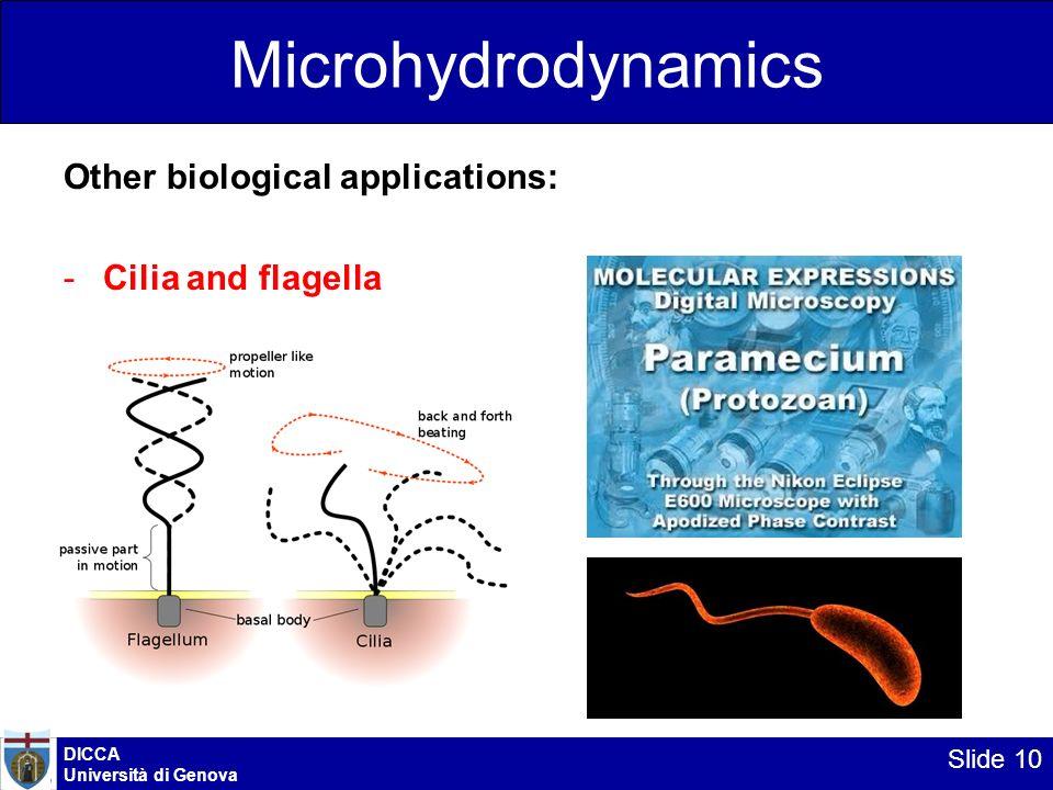 Microhydrodynamics Other biological applications: -Cilia and flagella DICCA Università di Genova Slide 10