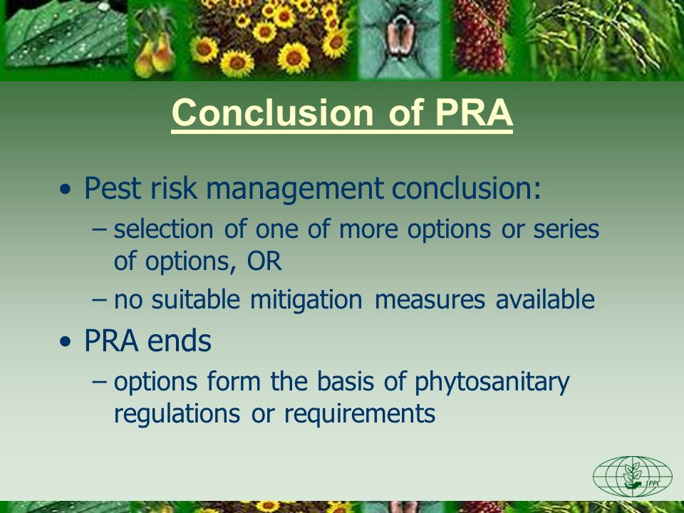 Conclusion of PRA Pest risk management conclusion: –selection of one of more options or series of options, OR –no suitable mitigation measures availab