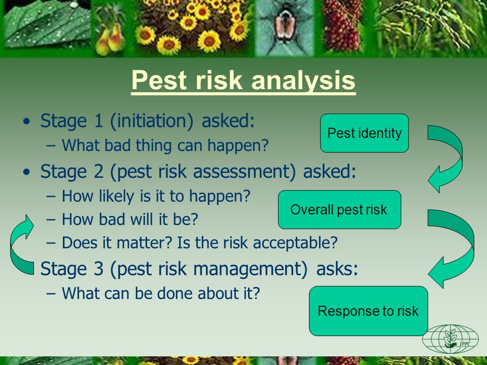 Stage 3: Pest Risk Management –Identifying options –Evaluating options –Selecting options CFIA-ACIA Conclusions of pest risk assessment Risk acceptable.