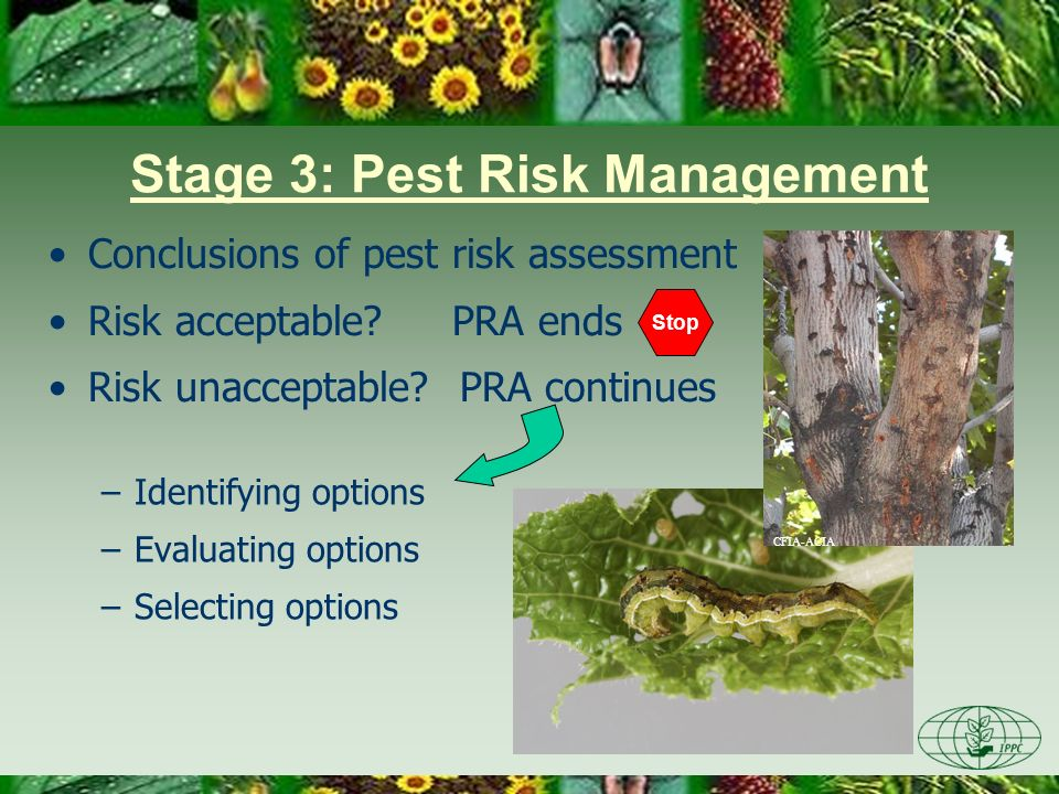 Conclusion of PRA Pest risk management conclusion: –selection of one of more options or series of options, OR –no suitable mitigation measures available PRA ends –options form the basis of phytosanitary regulations or requirements