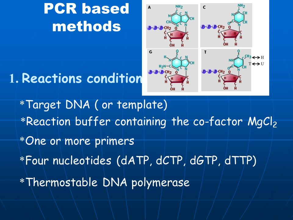 Polymerase Chain Reaction Powerful technique for amplifying DNA Amplified DNA are then separated by gel electrophoresis