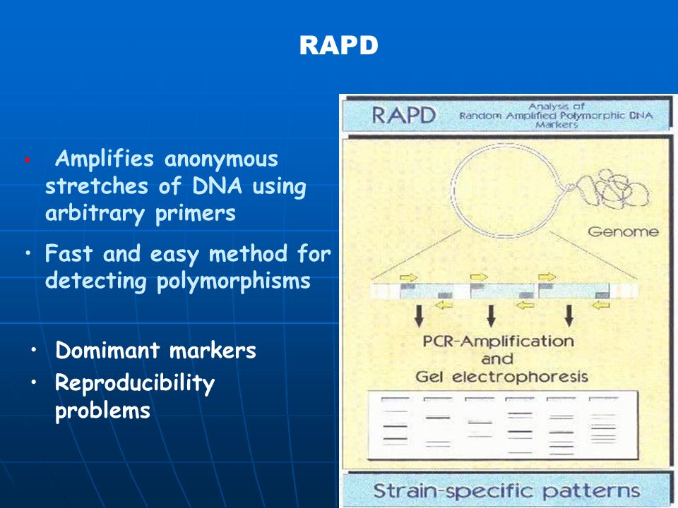 RAPD Markers The polymorphic RAPD marker band is isolated from the gel The polymorphic RAPD marker band is isolated from the gel It is used a template