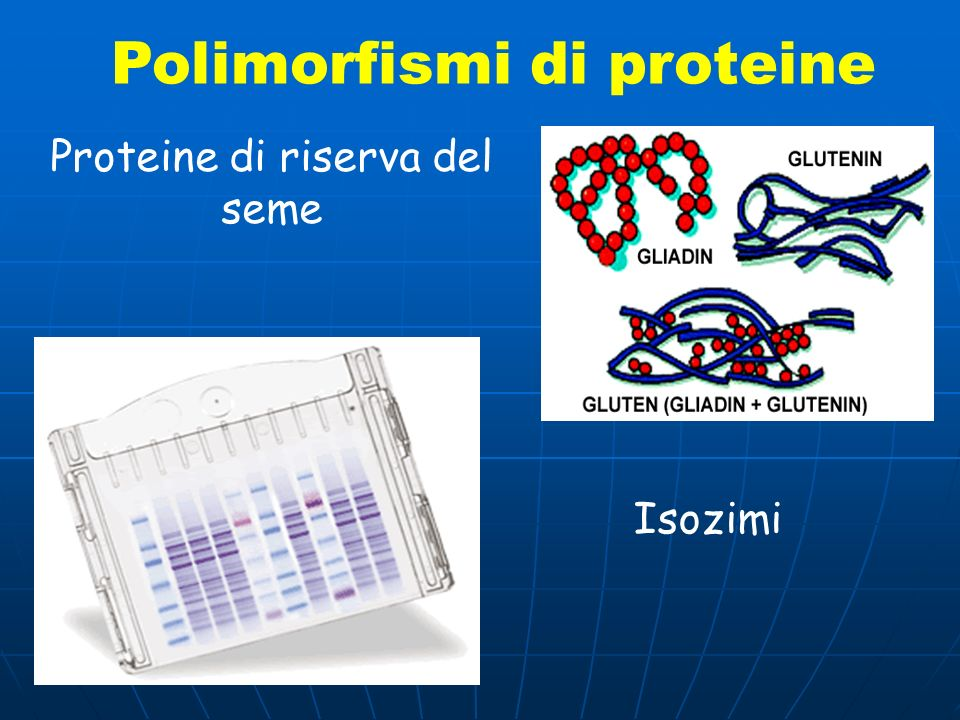 Potere di risoluzione allozimi (elettroforesi di proteine) DNA cloroplastico PCR-RFLP DNA cloroplastico PCR-RFLP RAPD (random amplified polymorphic DNA) AFLP (Amplified Fragment Length Polymorphism) Multi-locus fingerprints Microsatelliti (SSRs) Sequenze (SNPs)
