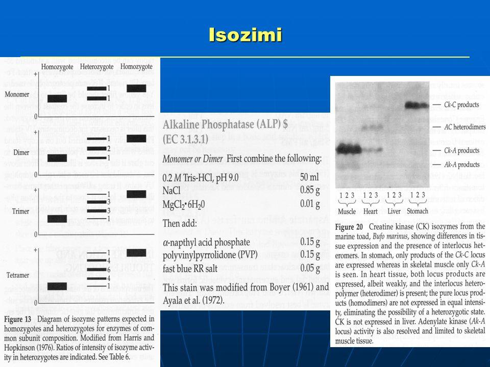 Proteine di riserva del seme Isozimi Polimorfismi di proteine