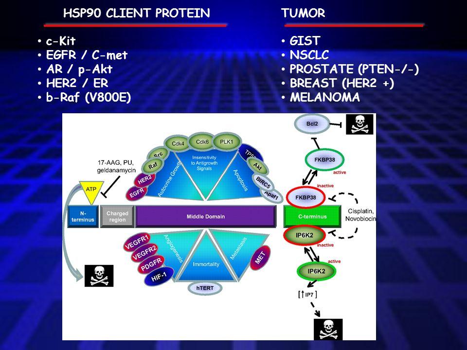 TUMOR GIST NSCLC PROSTATE (PTEN-/-) BREAST (HER2 +) MELANOMA HSP90 CLIENT PROTEIN c-Kit EGFR / C-met AR / p-Akt HER2 / ER b-Raf (V800E)