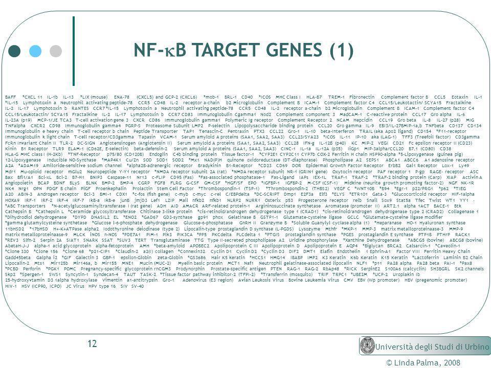 12 © Linda Palma, 2008 Università degli Studi di Urbino NF- B TARGET GENES (1) BAFF *CXCL 11 IL-1b IL-13 *LIX (mouse) ENA-78 (CXCL5) and GCP-2 (CXCL6)
