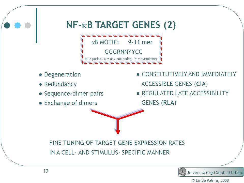 13 © Linda Palma, 2008 Università degli Studi di Urbino Degeneration Redundancy Sequence-dimer pairs Exchange of dimers NF- B TARGET GENES (2) B MOTIF