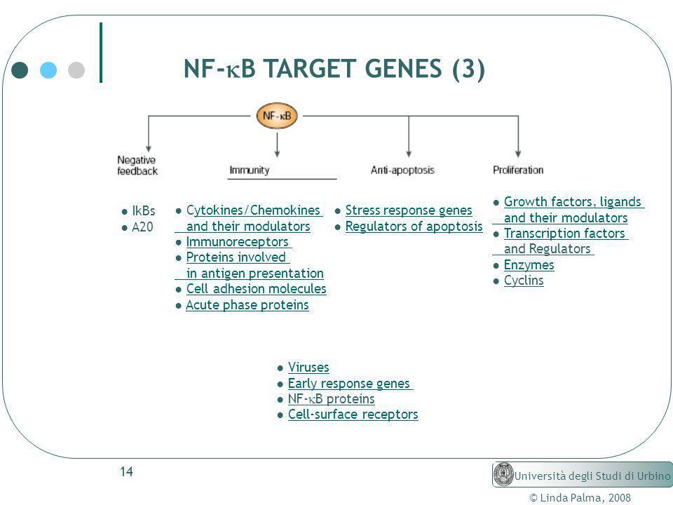 14 © Linda Palma, 2008 Università degli Studi di Urbino NF- B TARGET GENES (3) Growth factors, ligands and their modulators Transcription factors and