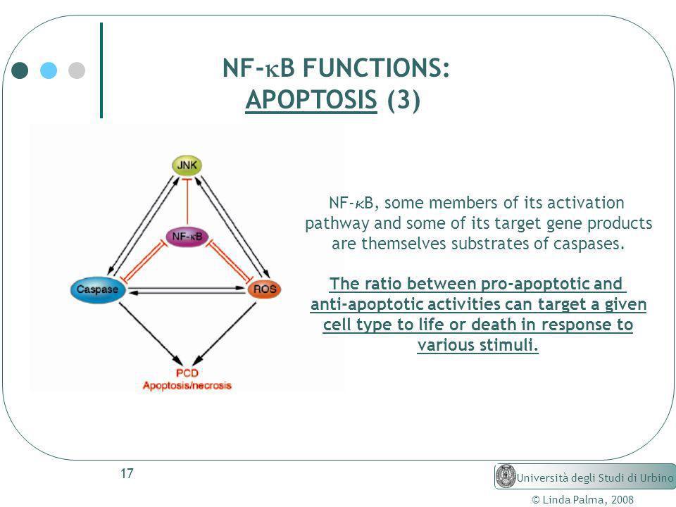 17 © Linda Palma, 2008 Università degli Studi di Urbino NF- B FUNCTIONS: APOPTOSIS (3) NF- B, some members of its activation pathway and some of its t