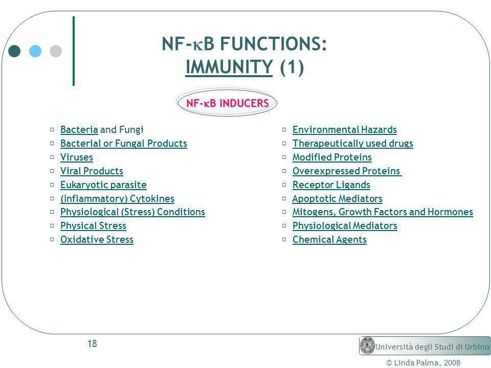18 © Linda Palma, 2008 Università degli Studi di Urbino NF- B FUNCTIONS: IMMUNITY (1) Bacteria and FungiBacteria Bacterial or Fungal Products Viruses