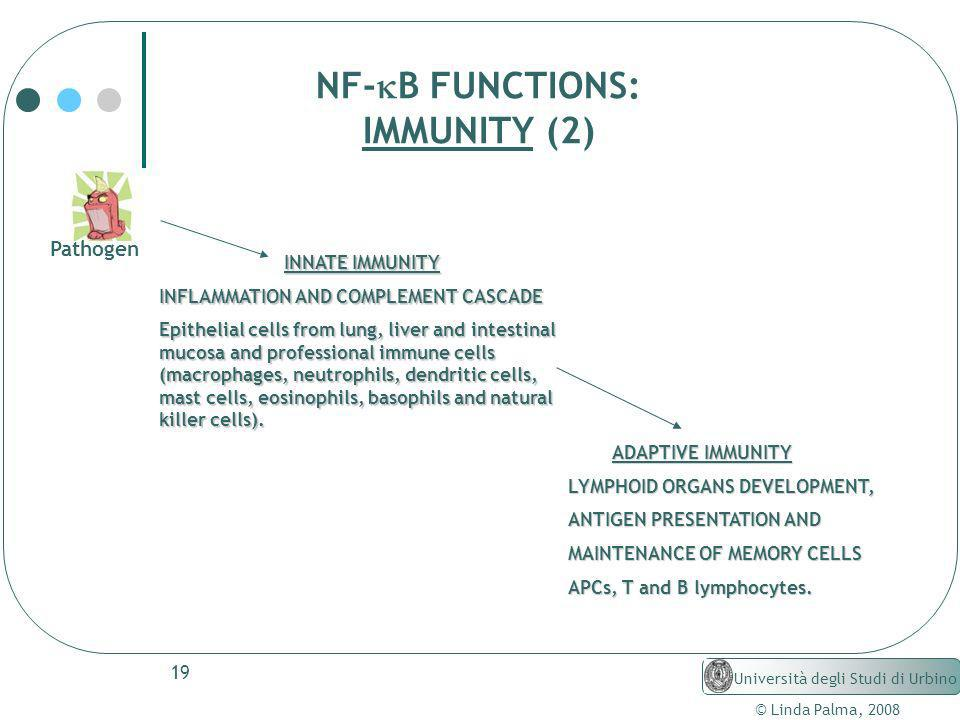 19 © Linda Palma, 2008 Università degli Studi di Urbino NF- B FUNCTIONS: IMMUNITY (2) Pathogen INNATE IMMUNITY INNATE IMMUNITY INFLAMMATION AND COMPLE