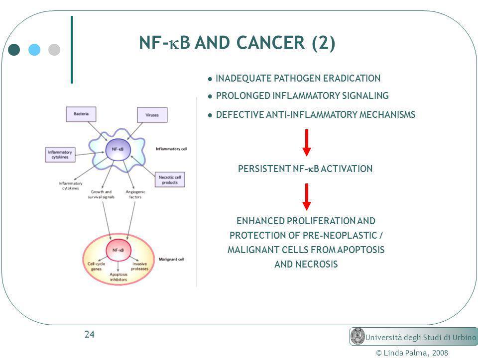 24 © Linda Palma, 2008 Università degli Studi di Urbino NF- B AND CANCER (2) INADEQUATE PATHOGEN ERADICATION PROLONGED INFLAMMATORY SIGNALING DEFECTIV