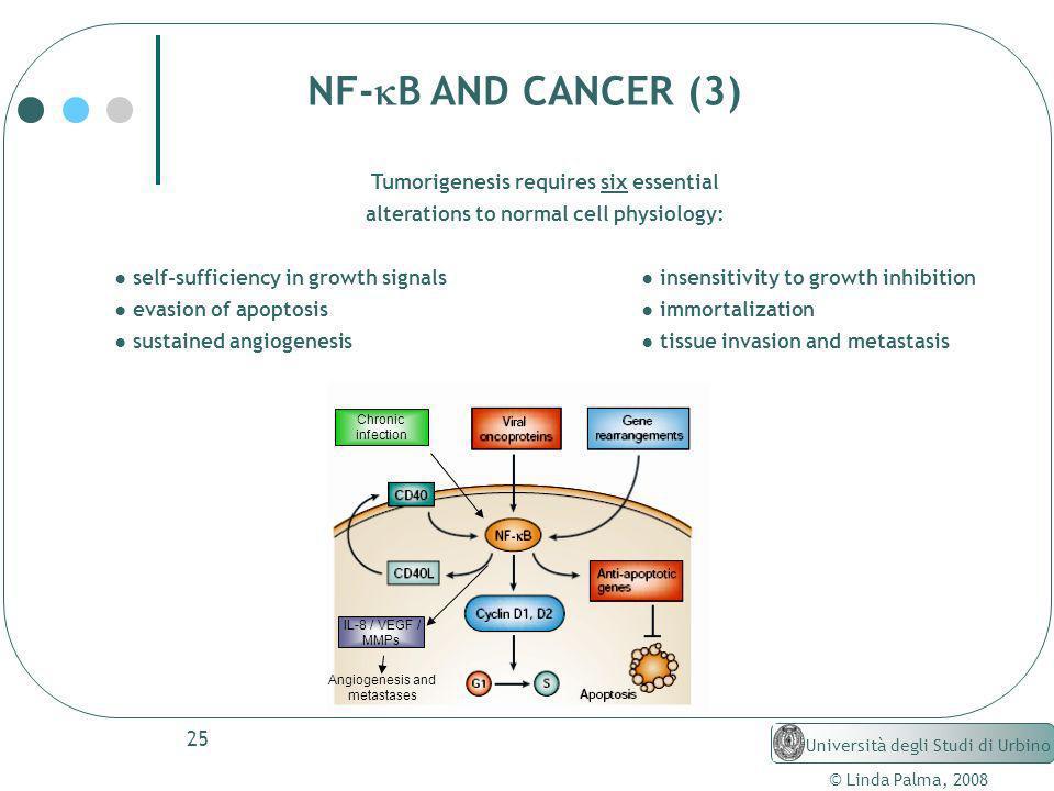 25 © Linda Palma, 2008 Università degli Studi di Urbino NF- B AND CANCER (3) Tumorigenesis requires six essential alterations to normal cell physiolog