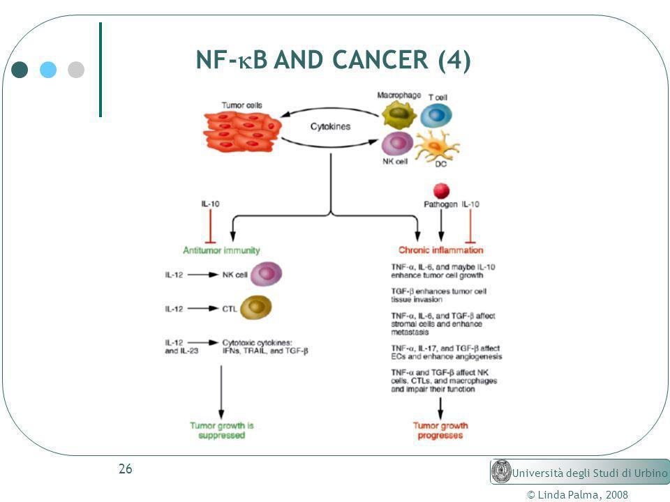 26 © Linda Palma, 2008 Università degli Studi di Urbino NF- B AND CANCER (4)