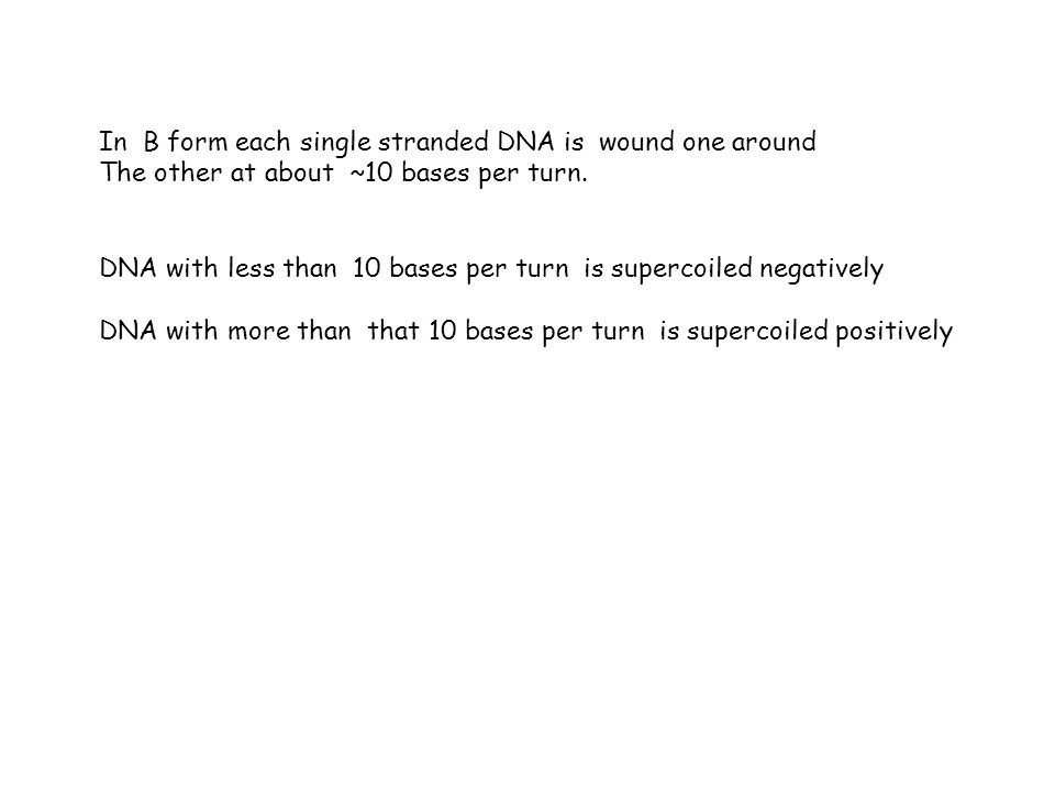 In B form each single stranded DNA is wound one around The other at about ~10 bases per turn. DNA with less than 10 bases per turn is supercoiled nega