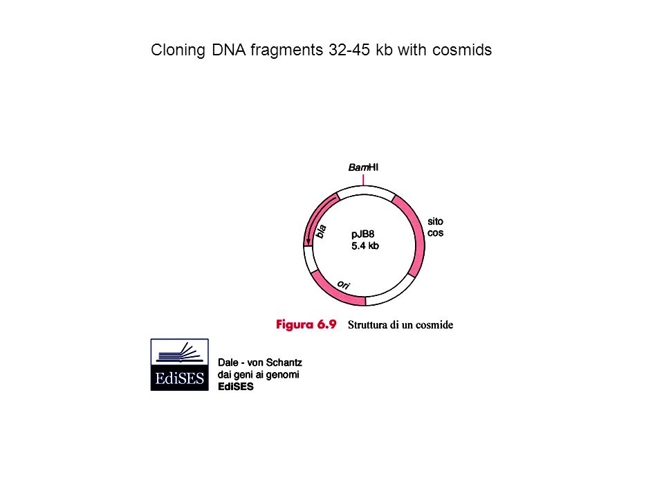 Cloning DNA fragments 32-45 kb with cosmids