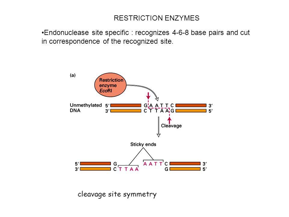 I cDNA posono espressi in cellule batteriche se si usa un promotore batterico