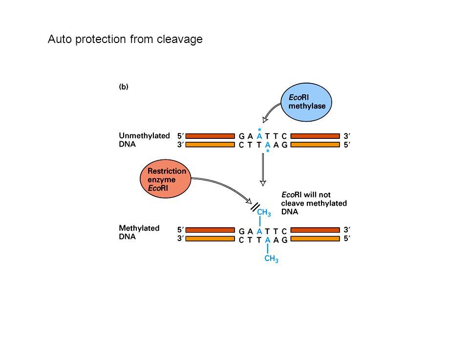 Polymarase Chain Reaction PCR