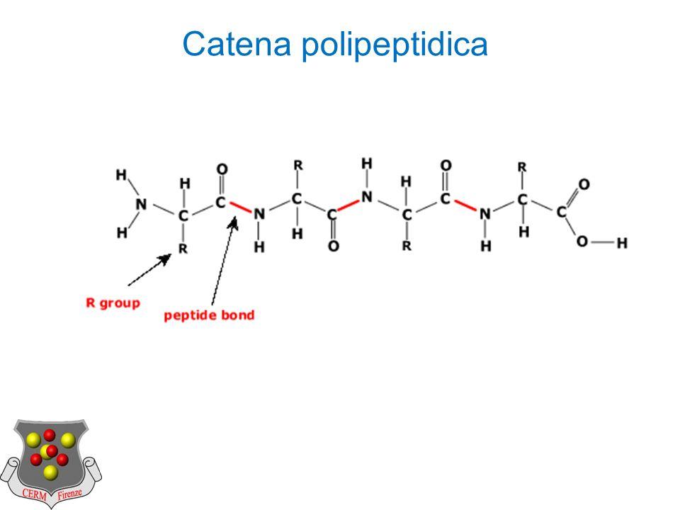 Catena polipeptidica