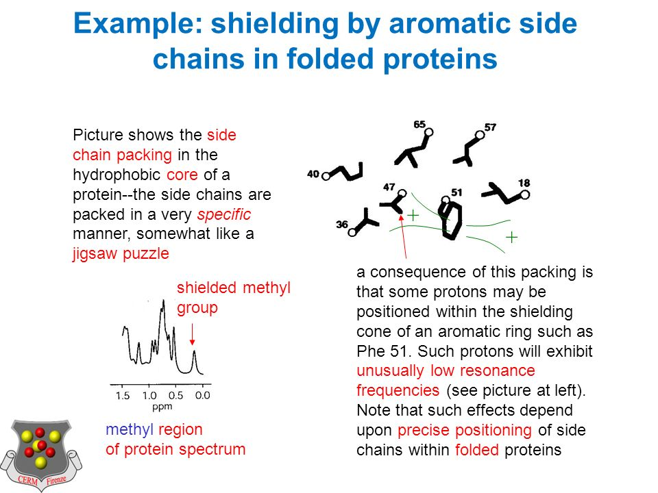 Example: shielding by aromatic side chains in folded proteins Picture shows the side chain packing in the hydrophobic core of a protein--the side chains are packed in a very specific manner, somewhat like a jigsaw puzzle a consequence of this packing is that some protons may be positioned within the shielding cone of an aromatic ring such as Phe 51.