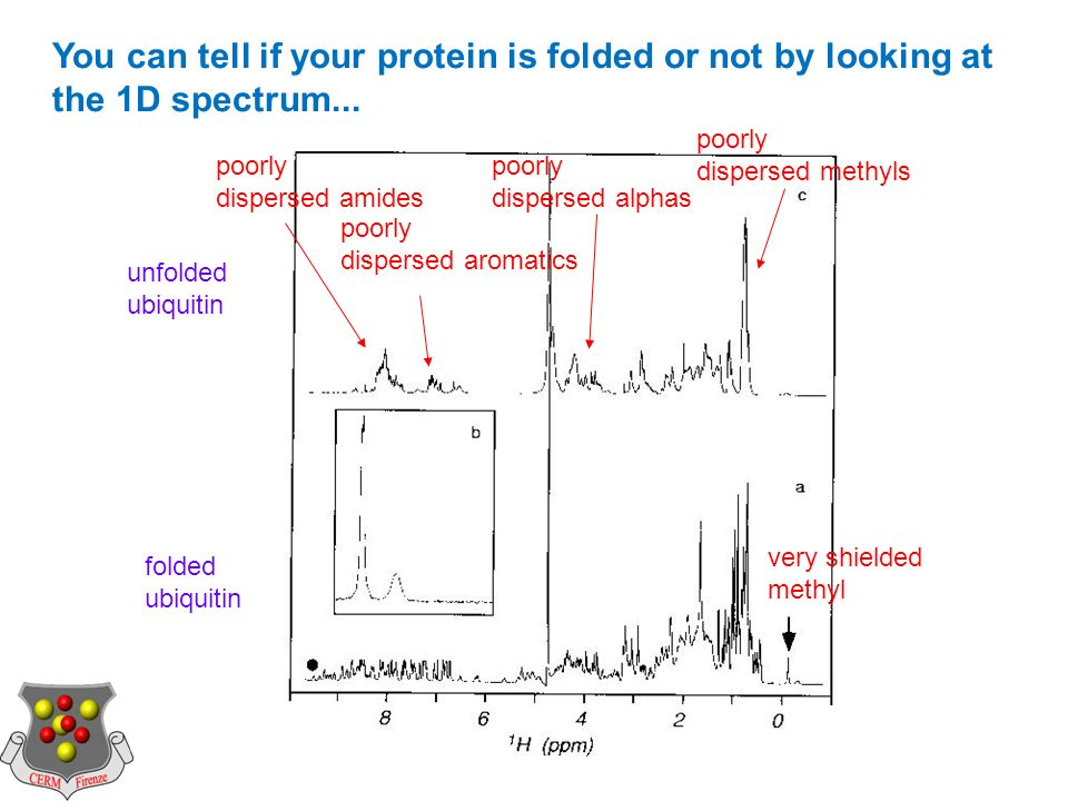 poorly dispersed amides poorly dispersed aromatics poorly dispersed alphas poorly dispersed methyls very shielded methyl unfolded ubiquitin folded ubiquitin You can tell if your protein is folded or not by looking at the 1D spectrum...