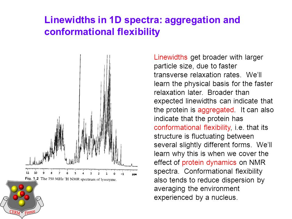 Linewidths in 1D spectra: aggregation and conformational flexibility Linewidths get broader with larger particle size, due to faster transverse relaxation rates.
