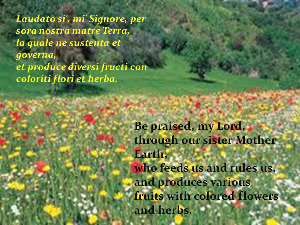 Laudato si , mi Signore, per sora nostra matre Terra, la quale ne sustenta et governa, et produce diversi fructi con coloriti flori et herba.