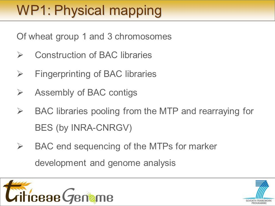 WP1: Physical mapping Of wheat group 1 and 3 chromosomes Construction of BAC libraries Fingerprinting of BAC libraries Assembly of BAC contigs BAC libraries pooling from the MTP and rearraying for BES (by INRA-CNRGV) BAC end sequencing of the MTPs for marker development and genome analysis
