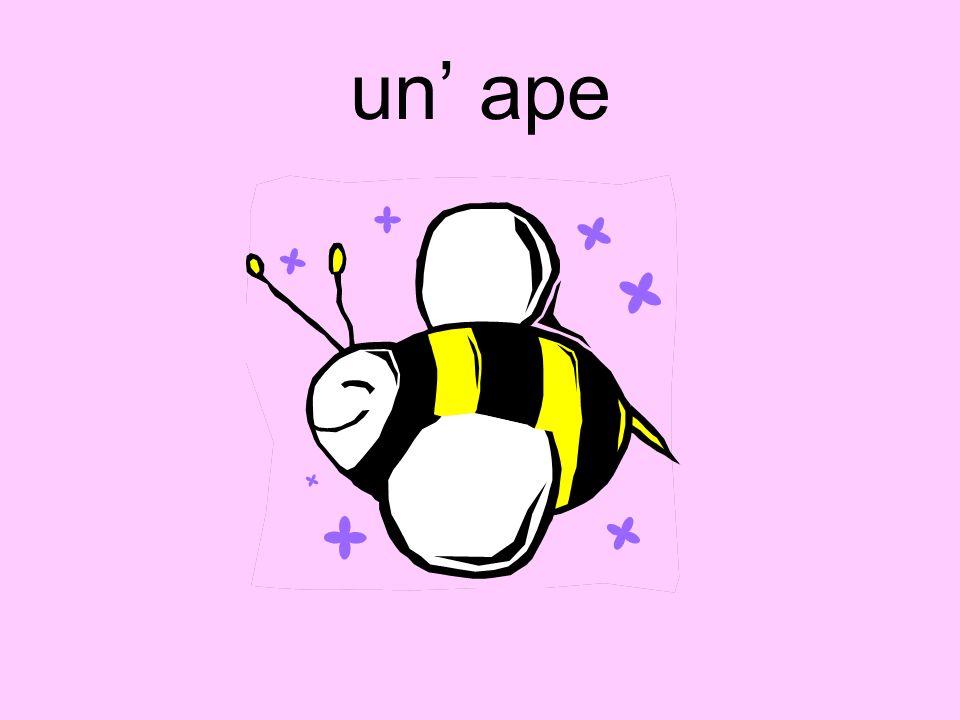 un ape