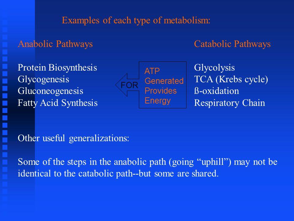 Examples of each type of metabolism: Anabolic PathwaysCatabolic Pathways Protein BiosynthesisGlycolysis GlycogenesisTCA (Krebs cycle) Gluconeogenesisß