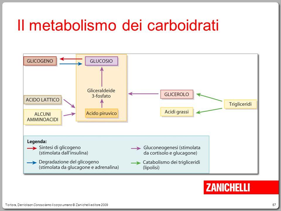 57 Il metabolismo dei carboidrati Tortora, Derrickson Conosciamo il corpo umano © Zanichelli editore 2009
