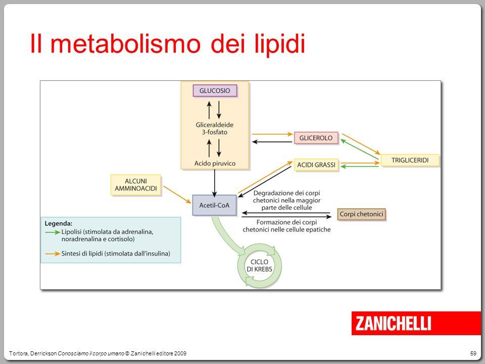 59 Il metabolismo dei lipidi Tortora, Derrickson Conosciamo il corpo umano © Zanichelli editore 2009