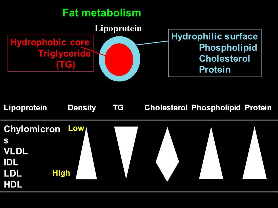 Lipoprotein Fat metabolism Hydrophilic surface Phospholipid Cholesterol Protein Hydrophobic core Triglyceride (TG) Lipoprotein Density TG Cholesterol