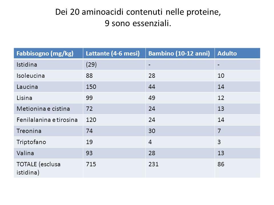 Dei 20 aminoacidi contenuti nelle proteine, 9 sono essenziali. Fabbisogno (mg/kg)Lattante (4-6 mesi)Bambino (10-12 anni)Adulto Istidina(29)-- Isoleuci