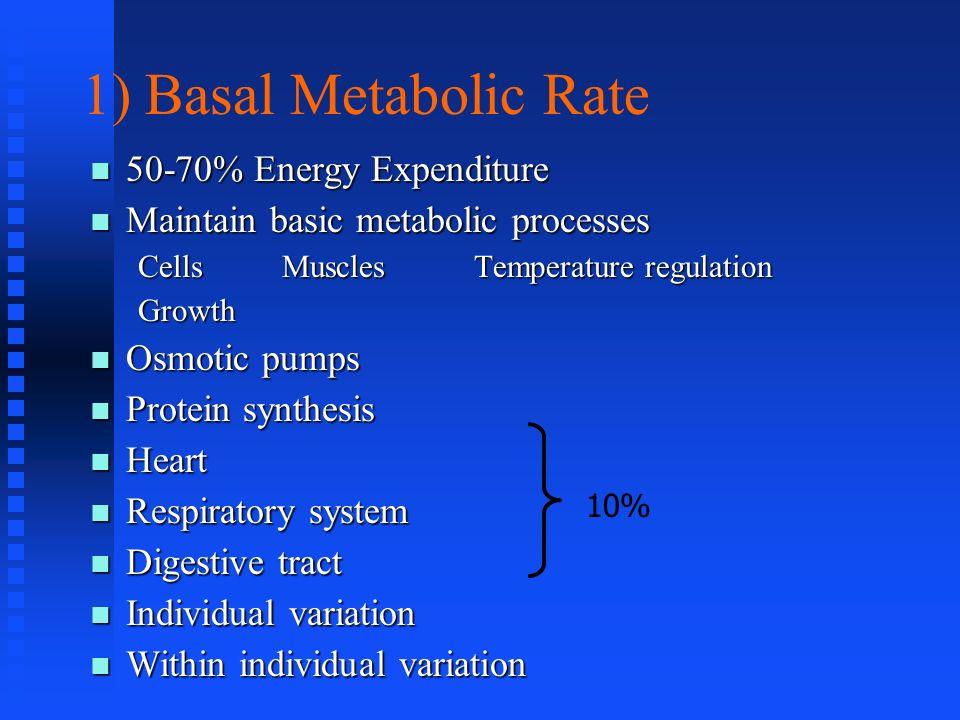 1) Basal Metabolic Rate 50-70% Energy Expenditure 50-70% Energy Expenditure Maintain basic metabolic processes Maintain basic metabolic processes Cell