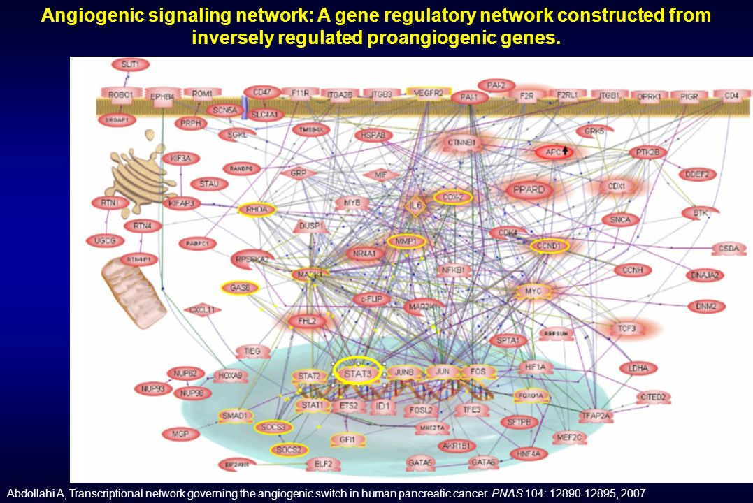 Angiogenic signaling network: A gene regulatory network constructed from inversely regulated proangiogenic genes. Abdollahi A, Transcriptional network