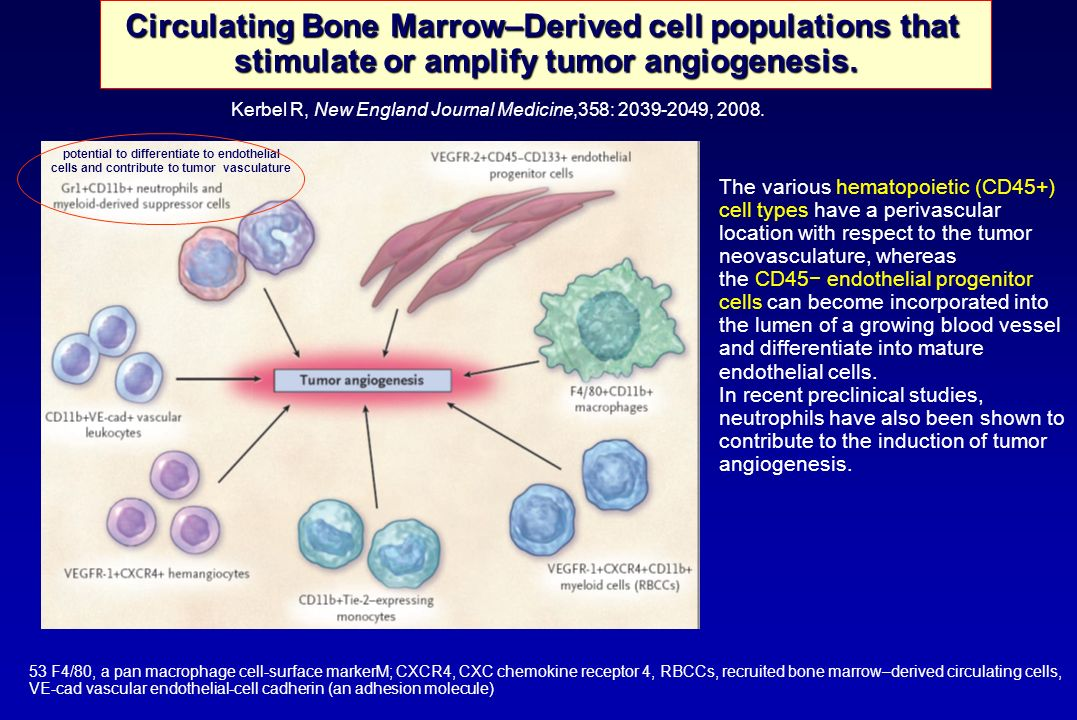 Circulating Bone Marrow–Derived cell populations that stimulate or amplify tumor angiogenesis. Kerbel R, New England Journal Medicine,358: 2039-2049,