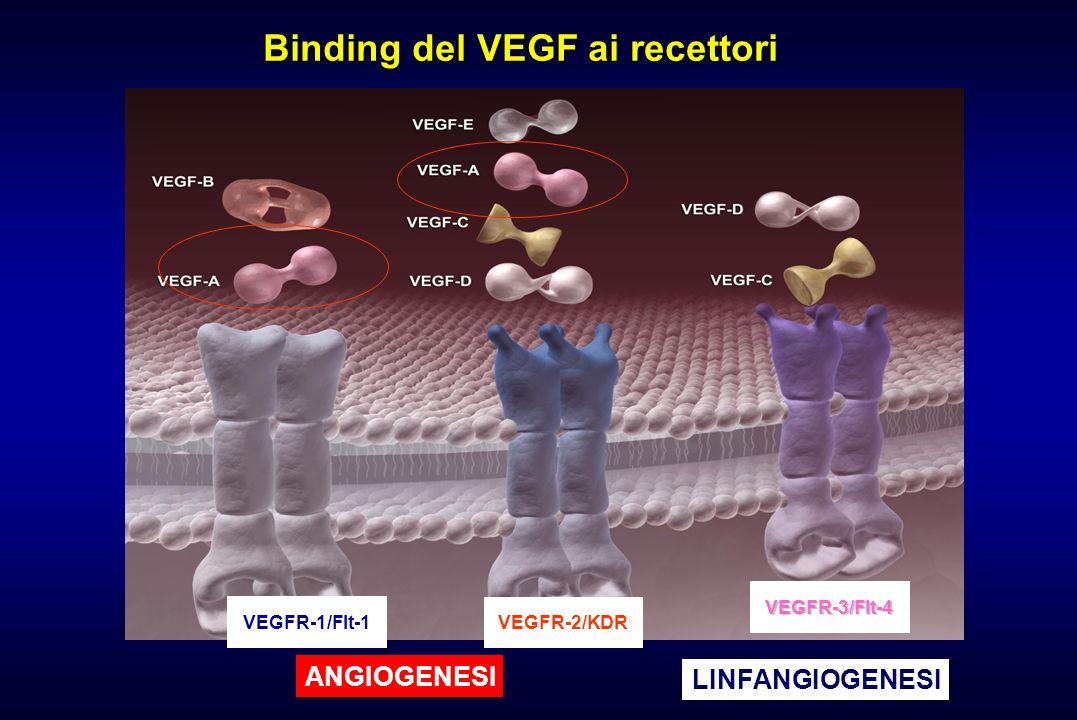 Binding del VEGF ai recettori VEGFR-1/Flt-1 VEGFR-2/KDR VEGFR-3/Flt-4 LINFANGIOGENESI ANGIOGENESI