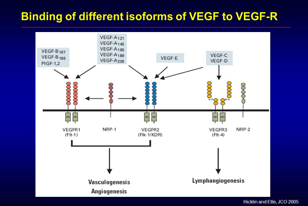 Binding of different isoforms of VEGF to VEGF-R Hicklin and Ellis, JCO 2005