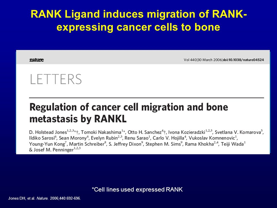 RANK Ligand induces migration of RANK- expressing cancer cells to bone Jones DH, et al. Nature. 2006;440:692-696. *Cell lines used expressed RANK