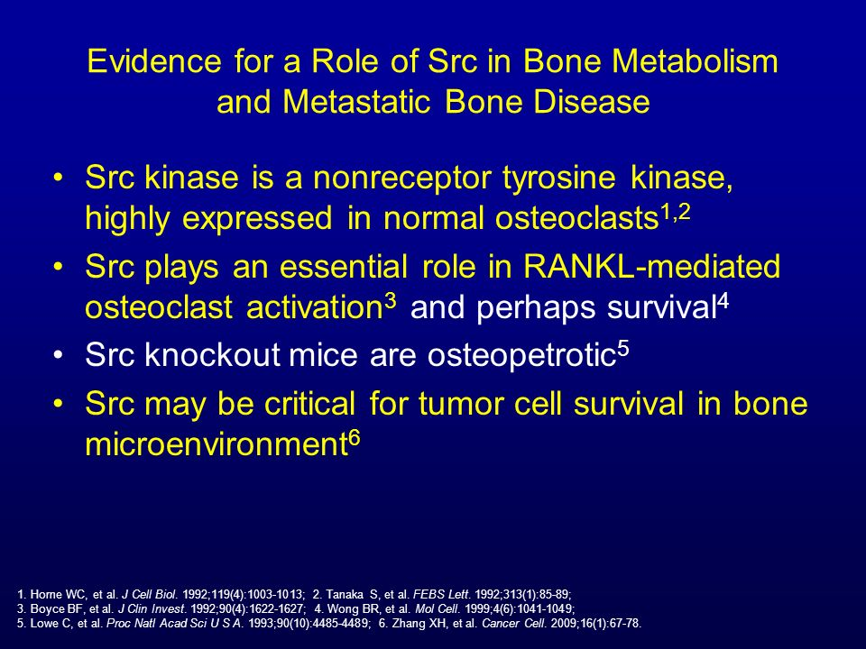 Evidence for a Role of Src in Bone Metabolism and Metastatic Bone Disease Src kinase is a nonreceptor tyrosine kinase, highly expressed in normal oste