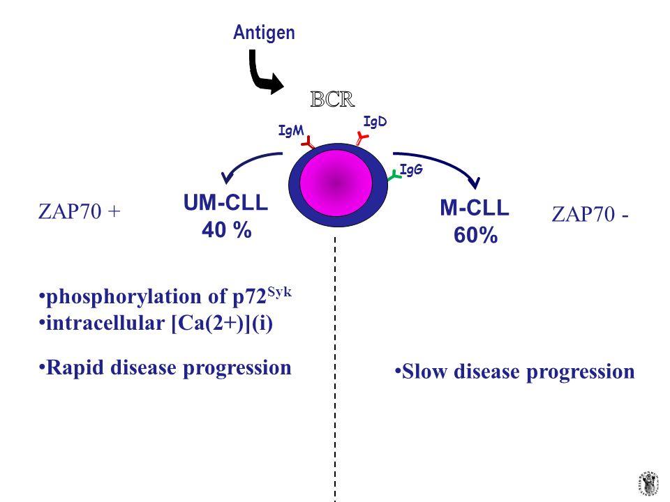 Antigen IgM IgD IgG UM-CLL 40 % M-CLL 60% ZAP70 + ZAP70 - phosphorylation of p72 Syk intracellular [Ca(2+)](i) Rapid disease progression Slow disease
