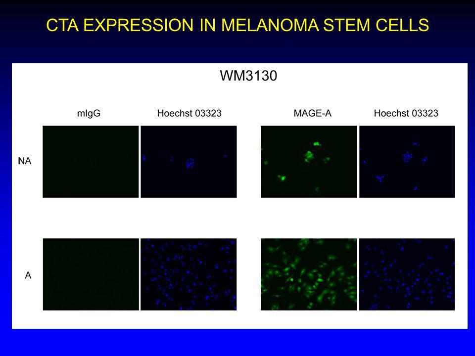 CTA EXPRESSION IN MELANOMA STEM CELLS