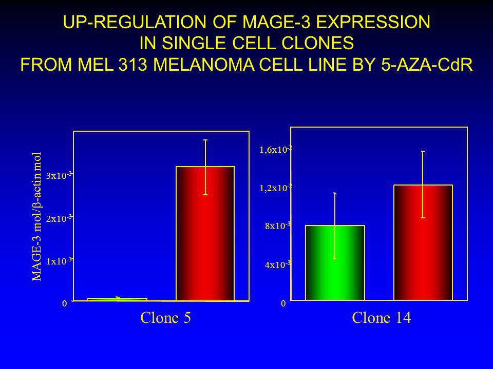 0 4x10 -3 8x10 -3 1,2x10 -2 1,6x10 -2 0 1x10 -3 2x10 -3 3x10 -3 UP-REGULATION OF MAGE-3 EXPRESSION IN SINGLE CELL CLONES FROM MEL 313 MELANOMA CELL LI