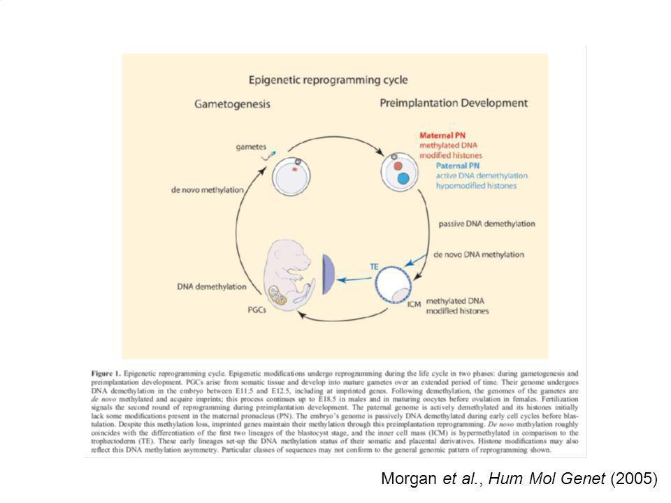 Hypomethylation (gene expression) Hypermethylation (gene silencing) Morgan et al., Hum Mol Genet (2005)