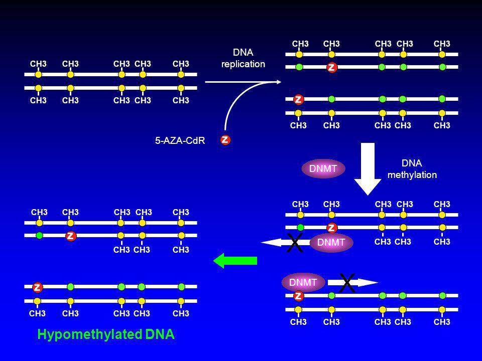 CH3 z 5-AZA-CdR DNA replication DNA methylation X CH3 z DNMT X CH3 z z z DNMT CH3 z z Hypomethylated DNA DNMT
