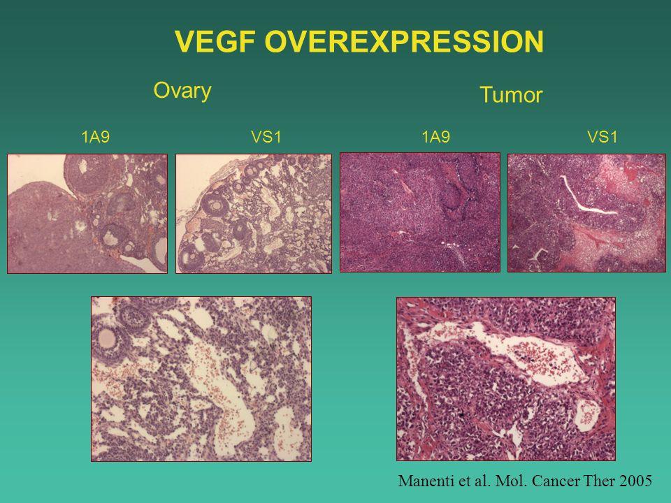 VEGF OVEREXPRESSION Ovary Tumor VS1 1A9 Manenti et al. Mol. Cancer Ther 2005